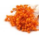 Pręciki do kwiatów pomarańczowy/dynia 100 szt